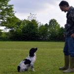Tim | Engelse Springer Spaniel